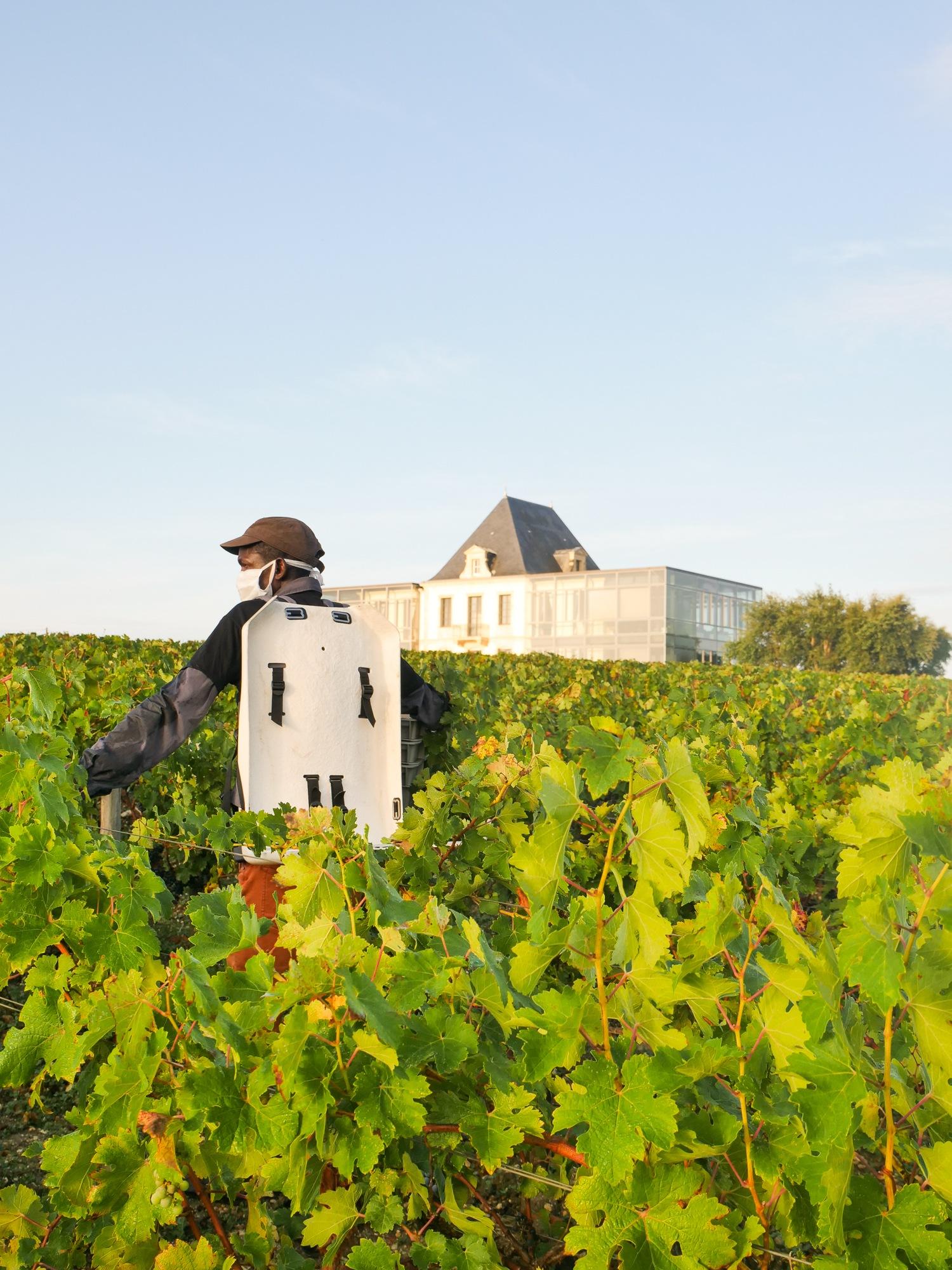 La viticulture, un rempart contre l'exclusion? - Chateau Pedesclaux